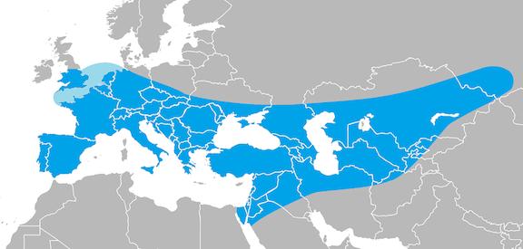 Área de expansión del Neandertal