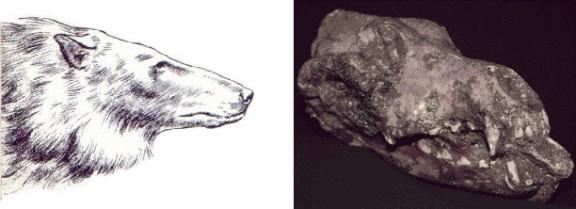 Perros prehistóricos